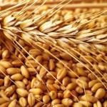 Зернометатели и прочая сельхозтехника доступна на действительно выгодных условиях