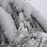 В Карпатах выпало 15 см снега