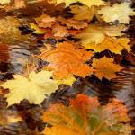Синоптики рассказали, когда в Украину придет настоящая осень