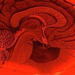 Сможем ли мы стать сверхсильными умственно?