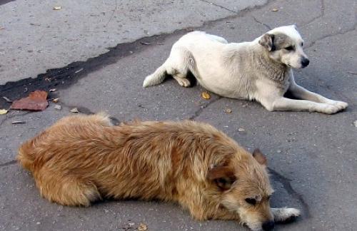 Проблема бездомных животных