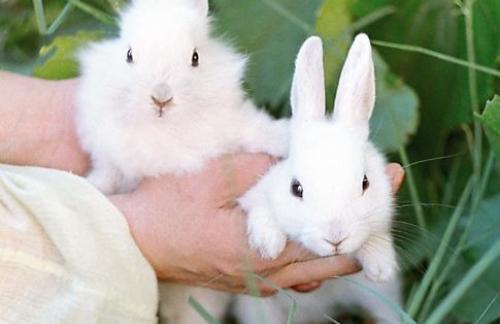 Домашние животные - откуда взялись кролики?
