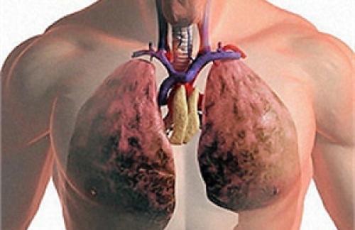 Интересные факты - дыхание и легкие человека
