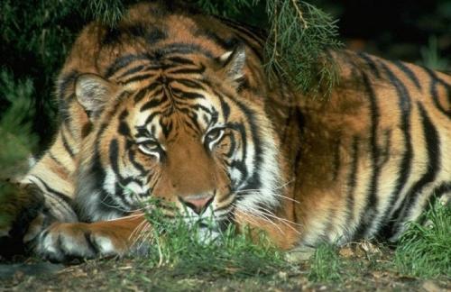 Смитсоновский институт опубликовал результаты международного проекта Wild