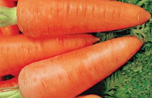 Расти морковка большая и маленькая