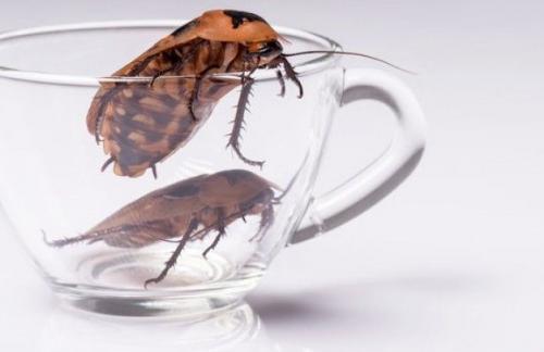 Как избавится от домашних насекомых?