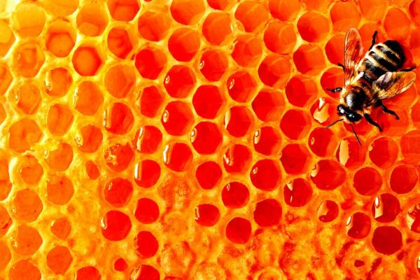 10 причин употреблять мед чаще