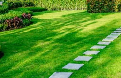 Ухоженный и красивый газон