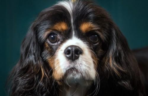 Секретный гарвардский стартап хочет сделать бессмертными собак, а затем и людей