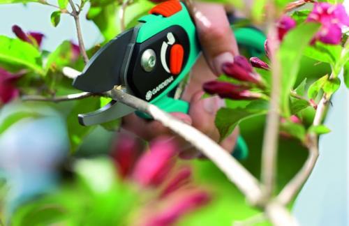 Обрезка сада. Выбираем инструменты для обрезки сада