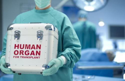 Впервые осуществлена пересадка лёгких «из пробирки»
